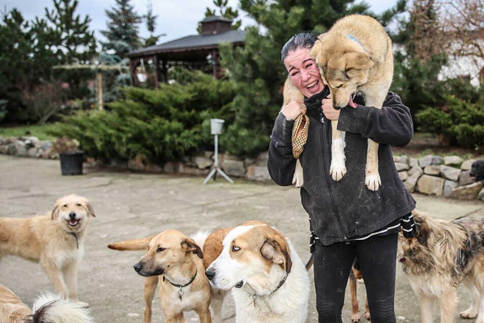 Diese Tierfreundin hat das größte Hunderudel in Sachsen