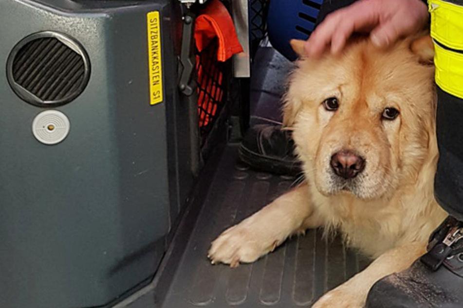 Von Feuerwehr gerettet: Wer kennt diesen Hund?