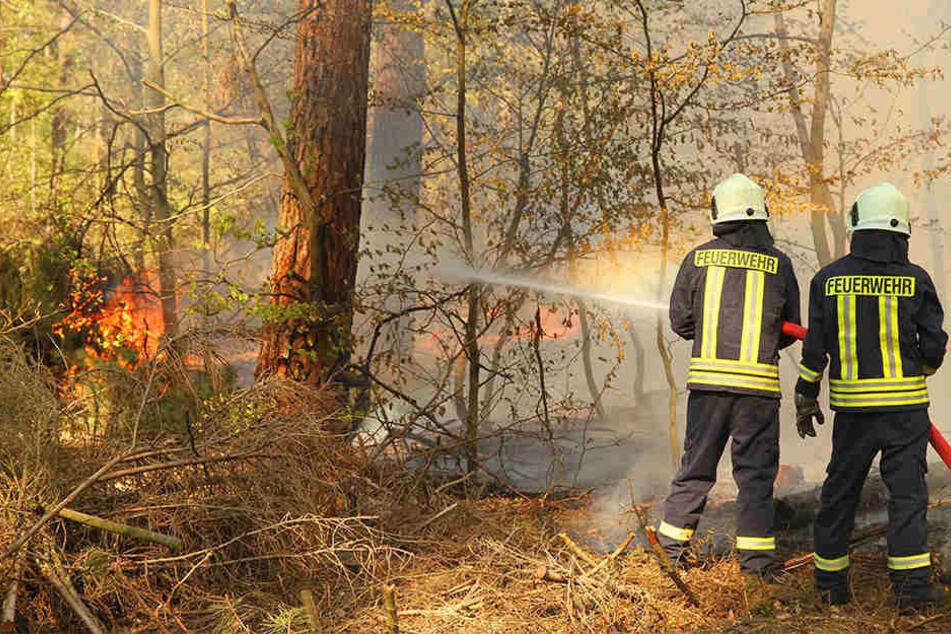 Feuerwehrleute löschen brennendes Unterholz.