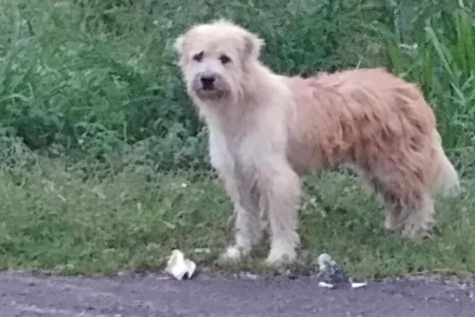 Ein Hund saß mehrere Jahre lang an einer Straße und wartete auf seine Familie.