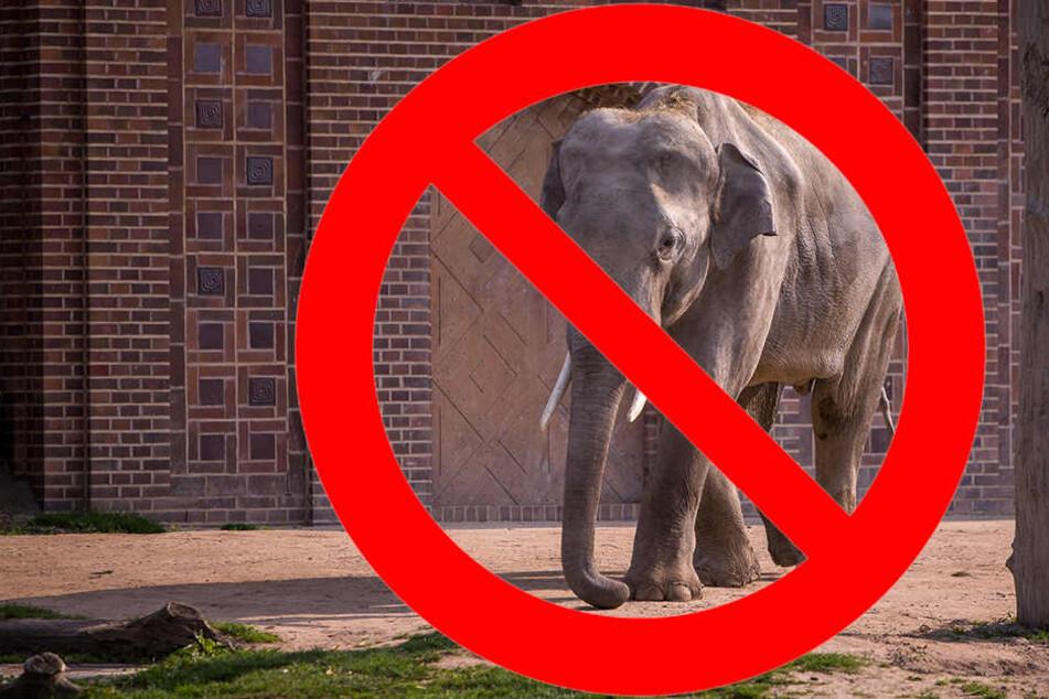 Nach Attacke auf Pfleger: Ende der Elefanten-Haltung gefordert