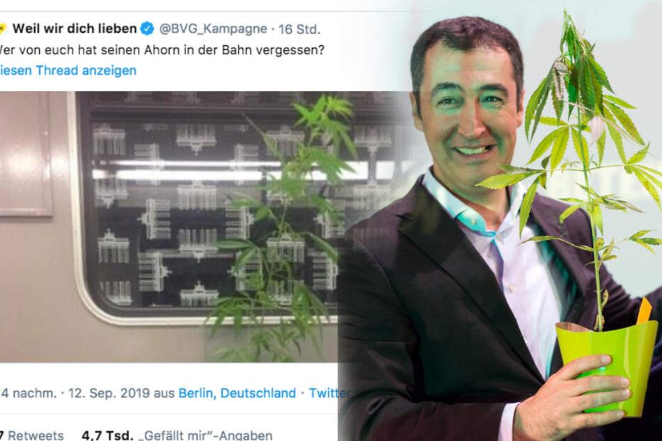 BVG sucht Besitzer einer Cannabis-Pflanze: Grünen-Politiker Cem Özdemir meldet sich zu Wort