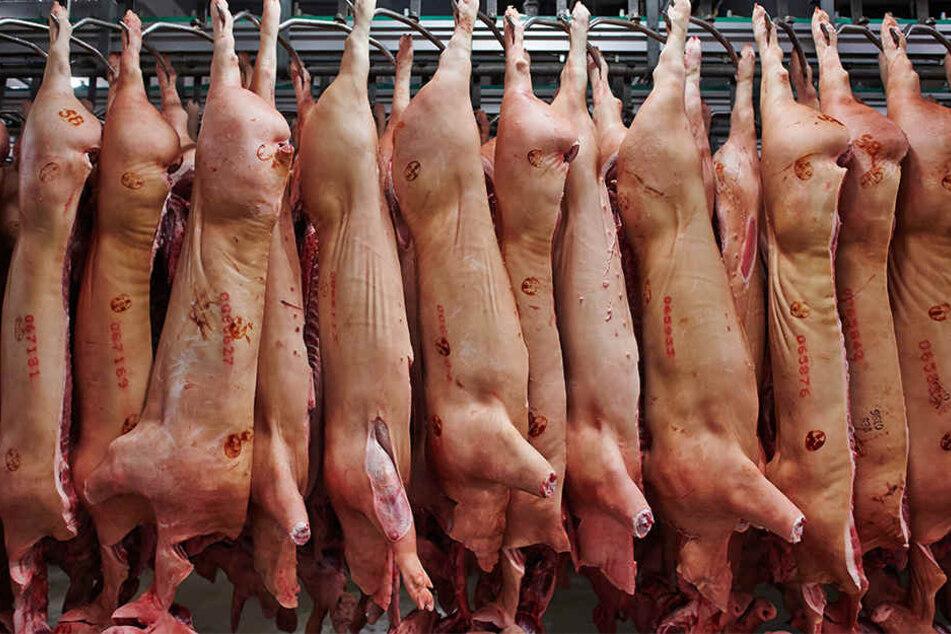 Das Unternehmen Tönnies möchte in naher Zukunft mehr Schweine in seinem Werk in Rheda schlachten. (Symbolbild)