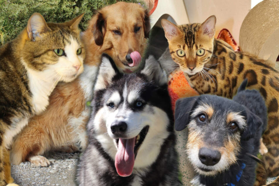 5 besondere Hunde und Katzen: Diese Tiere suchen dringend ein Zuhause