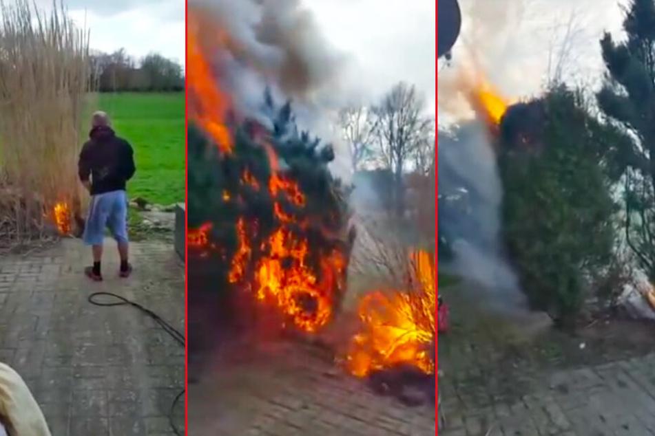 Zuerst ist es ein kleines Feuer (von links nach rechts), doch nach wenigen Sekunden brennt bereits der ganze Busch und am Ende kommen die Flammen der Hauswand gefährlich nahe.