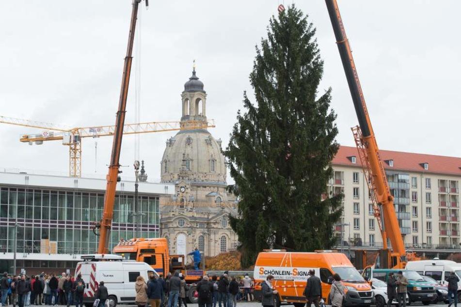 Der Weihnachtsbaum steht auf dem Striezelmarkt.