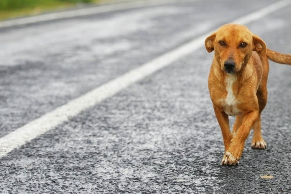 Drama auf der A5: Hund spaziert auf Autobahn und stirbt bei Zusammenprall mit Pkw