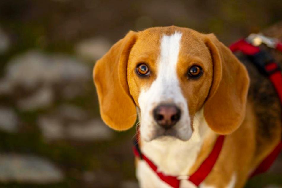 Hundedurchfall: Hilfe gibt es jetzt in der Apotheke