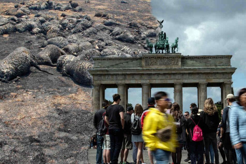 Temperaturen wie in Australien: Berlin droht in Zukunft der Hitze-Hammer!
