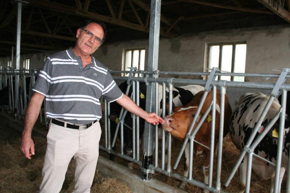 Youssef Farhat setzt seine Rinder in den Flieger nach Katar.