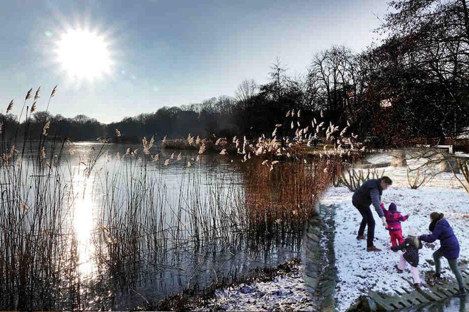 Chemnitz: Familie vom Schlossteich gerettet: Stadt sperrt öffentliche Eisflächen