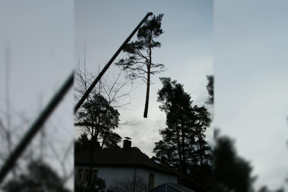 Ein großer Autokran hob die umgestürzte Bäume aus dem Garten.
