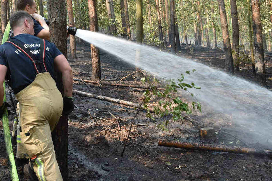Feuerwehrleute löschen Glutnester im Grunewald. Nach Angaben der Feuerwehr brannten etwa 4.0000 Quadratmeter Waldboden.