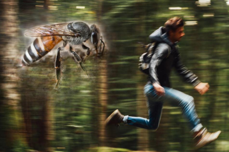 Horror-Wanderung: Mann will pinkeln und wird von Wespen verfolgt