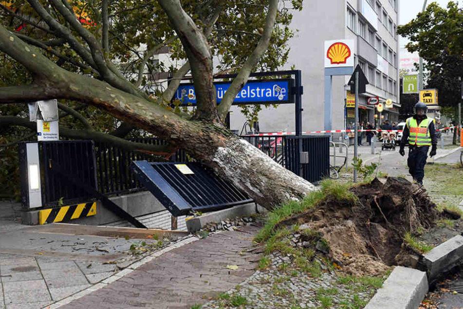 Ein umgestürzter Baum beschädigte einen U-Bahneingang.