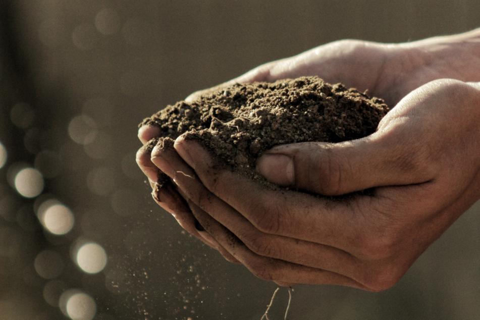 Das Endprodukt des Kompostierens ist nährstoffreicher Humus, der für ein gutes Pflanzenwachstum sorgt.