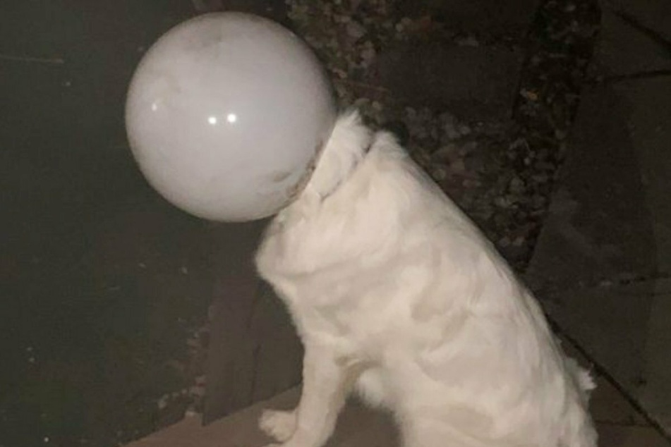 "Man walks out to find ""spacedog"" has landed in his backyard!"