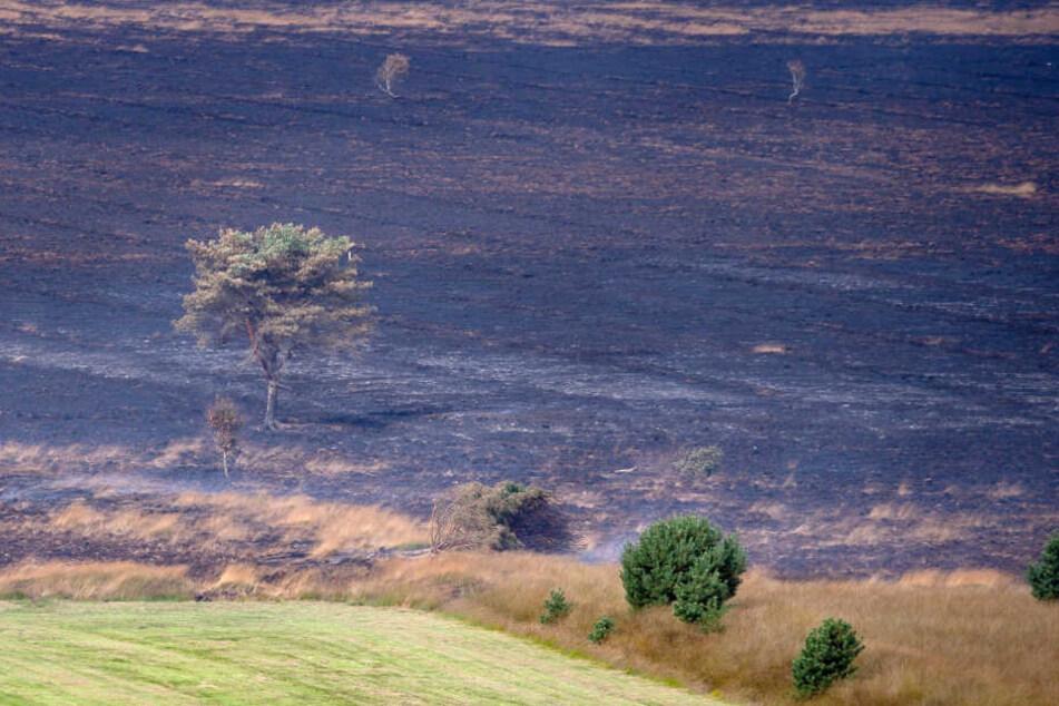 Wochenlang brannte erst kürzlich auch das emsländische Moor auf einem Bundeswehr-Testgelände in Meppen, Niedersachsen. Die Feuerwehr will eine Brandausweitung wie hier im Ahrenloher Moor unbedingt verhindern.