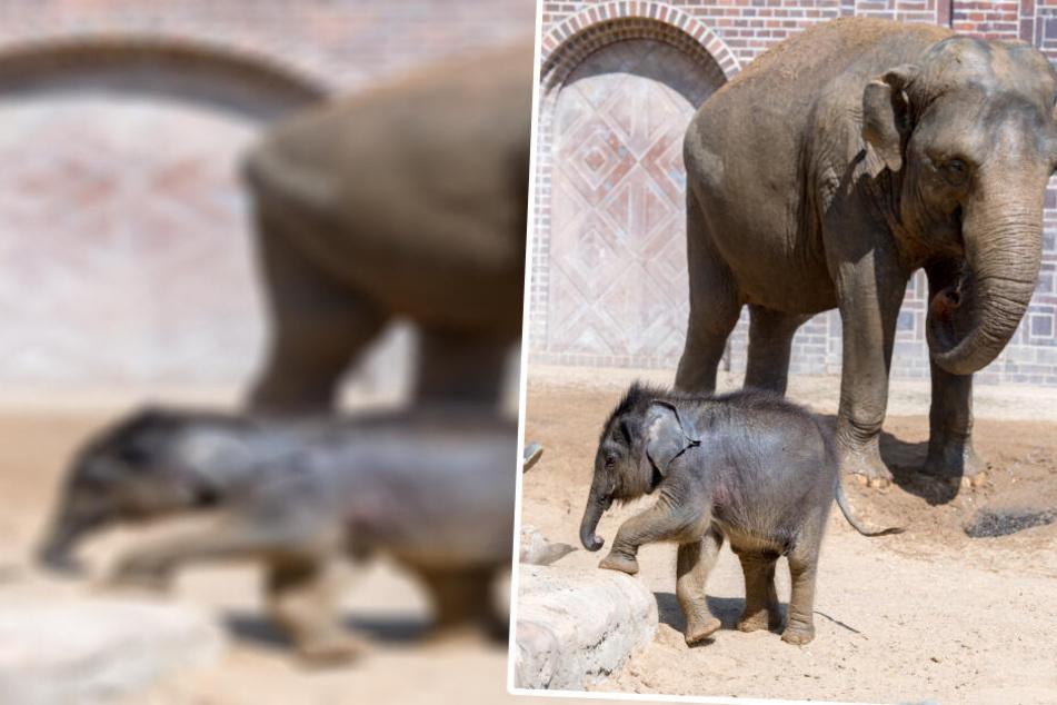 Ab nächster Woche dürfte Ihr den Namen für den kleinen Elefanten bestimmen.