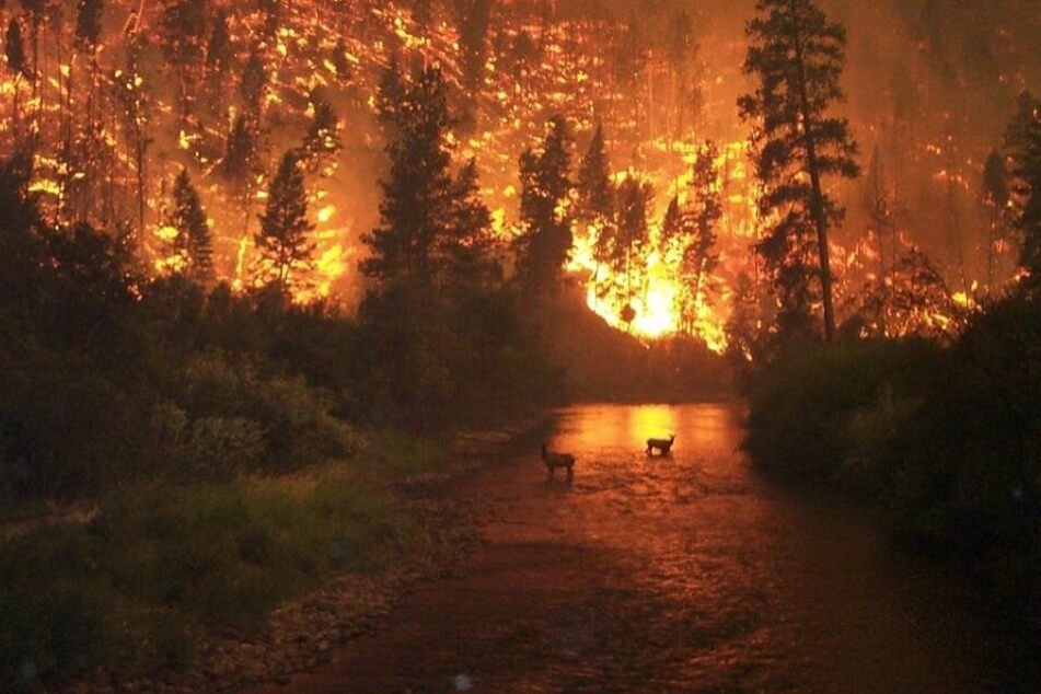 Versicherer machen Bilanz: Was die Naturkatastrophen 2019 gekostet haben