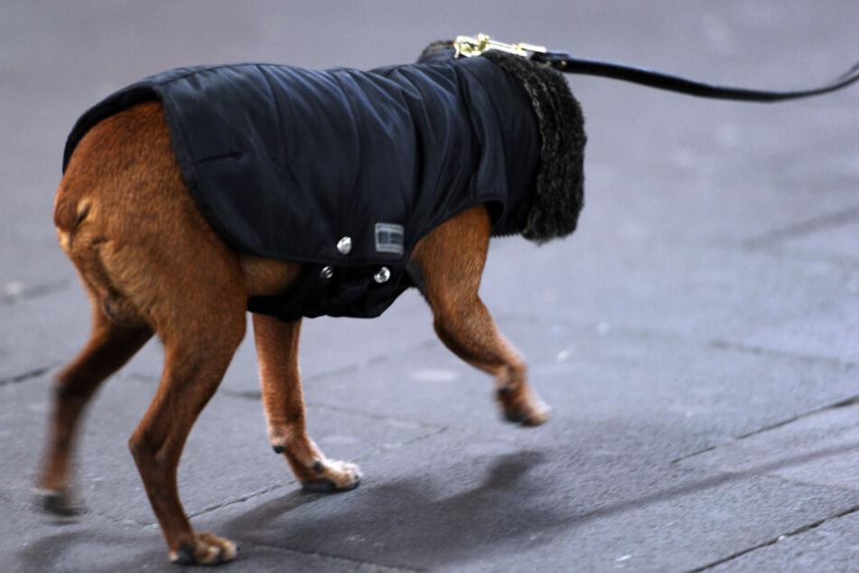 Ein Mantel schützt den Hund nicht, wenn er länger sitzen muss. (Archivbild)