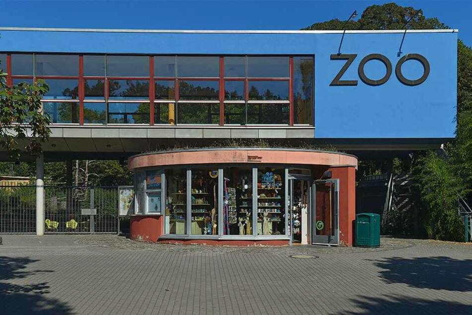 Dresdens Zoo war bislang mit seiner Faultierzucht recht erfolgreich. Doch im Moment hakt's.
