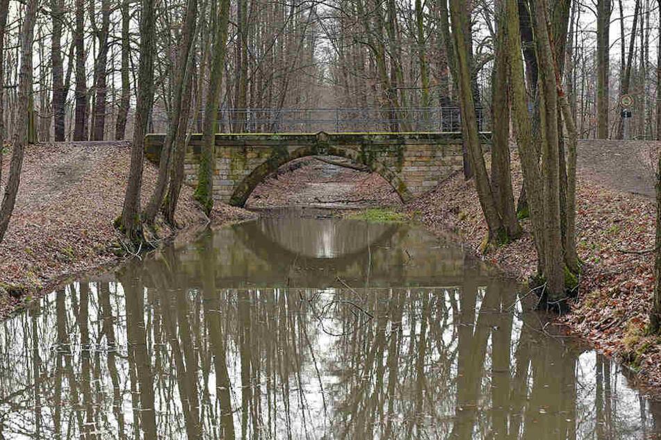 Der Kanalabschnitt im Wald ist noch verschlammt.
