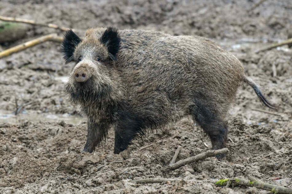 Tierschützer halten die Pläne der Politik für fragwürdig. (Symbolbild)