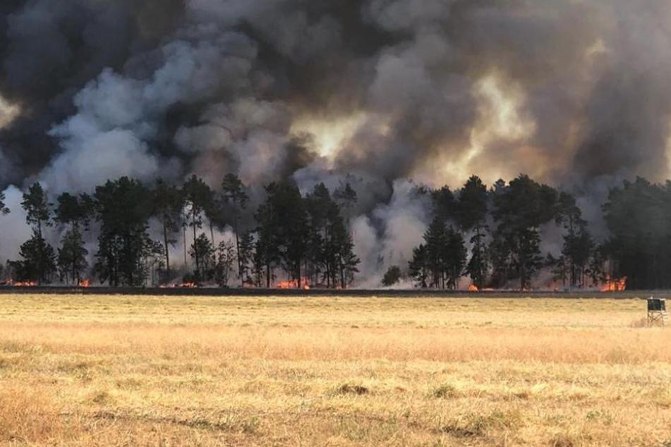 Größter Waldbrand seit 18 Jahren! Fläche von 100 Fußballfeldern vernichtet