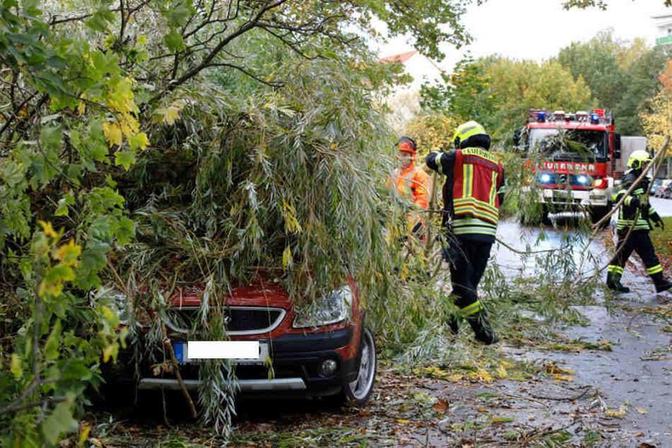 Am Donnerstag wurde die Feuerwehr gegen 16 Uhr in Chemnitz zur Straße Am Karbel gerufen. Dort hielt eine Weide dem Sturm nicht stand und stürzte auf zwei PKW ...