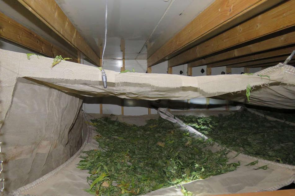 In den Kellerräumen eines Gebäudes wurden die Cannabispflanzen getrocknet.