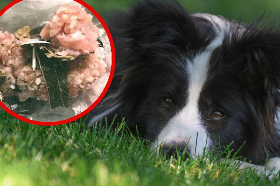 Frauchen geht mit Hund Gassi, danach muss er sofort operiert werden