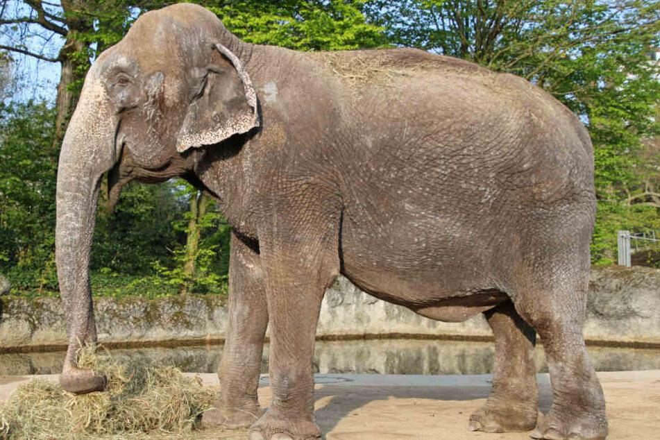 Sie kam abgemagert und dehydriert in den Zoo: Jetzt ist Lina (46) gestorben