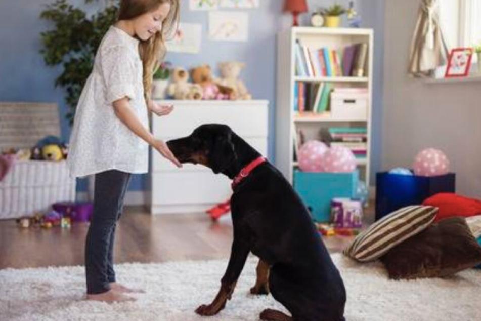Vor dem Kauf sollen sich potenzielle Hundehalter genau über ihren neuen Schützling informieren.