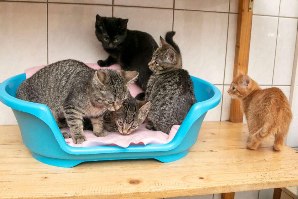 Diese fünf Kätzchen entsorgte ein Tierquäler einfach im Wald.
