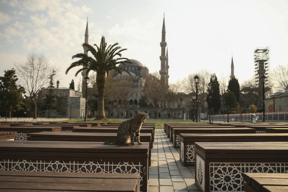 Eine Katze sitzt im menschenleeren Garten vor der Blauen Moschee in Istanbul.