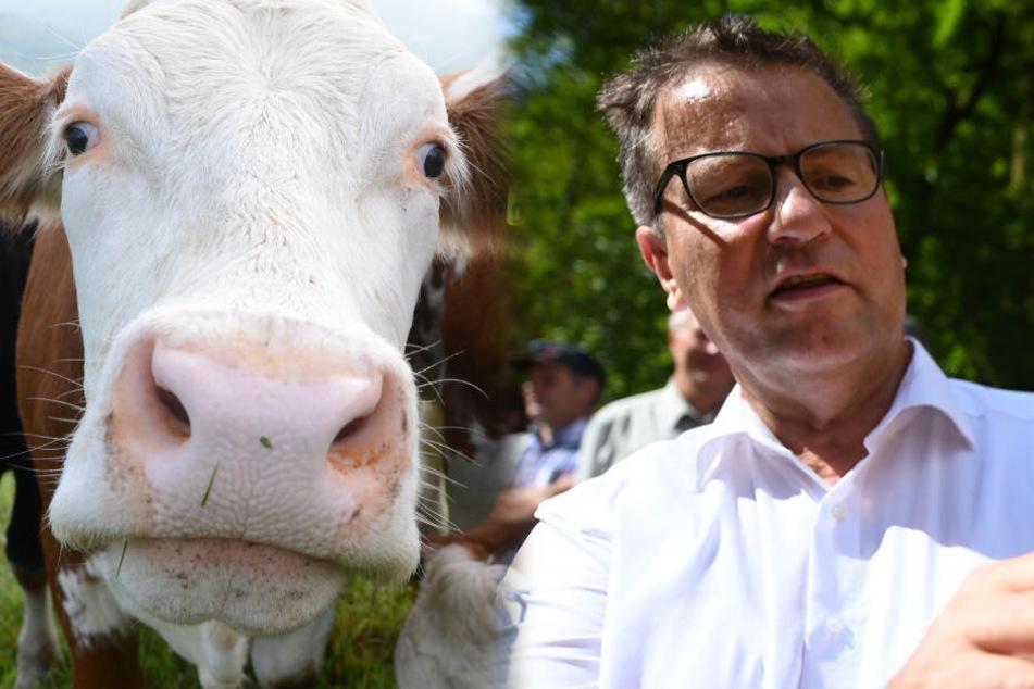 Darum schaut der Agrarminister durch die Augen einer Kuh