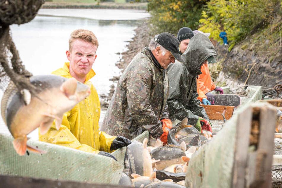 Am Freitag fand bereits das traditionelle Abfischen statt.