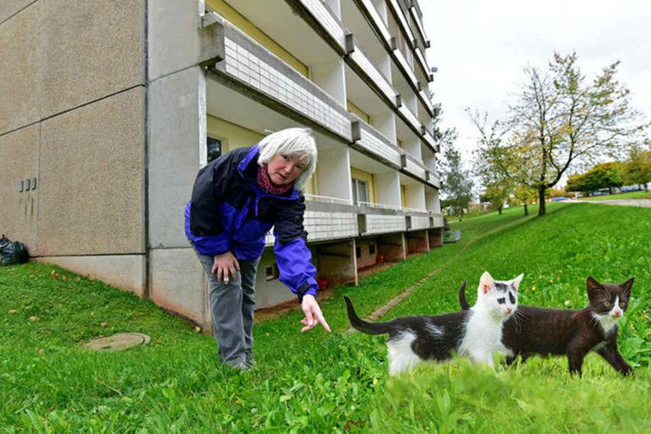 Grausam! Kleine Kätzchen offenbar vom Balkon geworfen