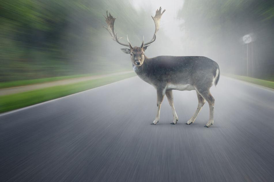 Vorsicht vor Wildschwein, Hirsch & Co.: Das müsst ihr bei Wildunfällen beachten