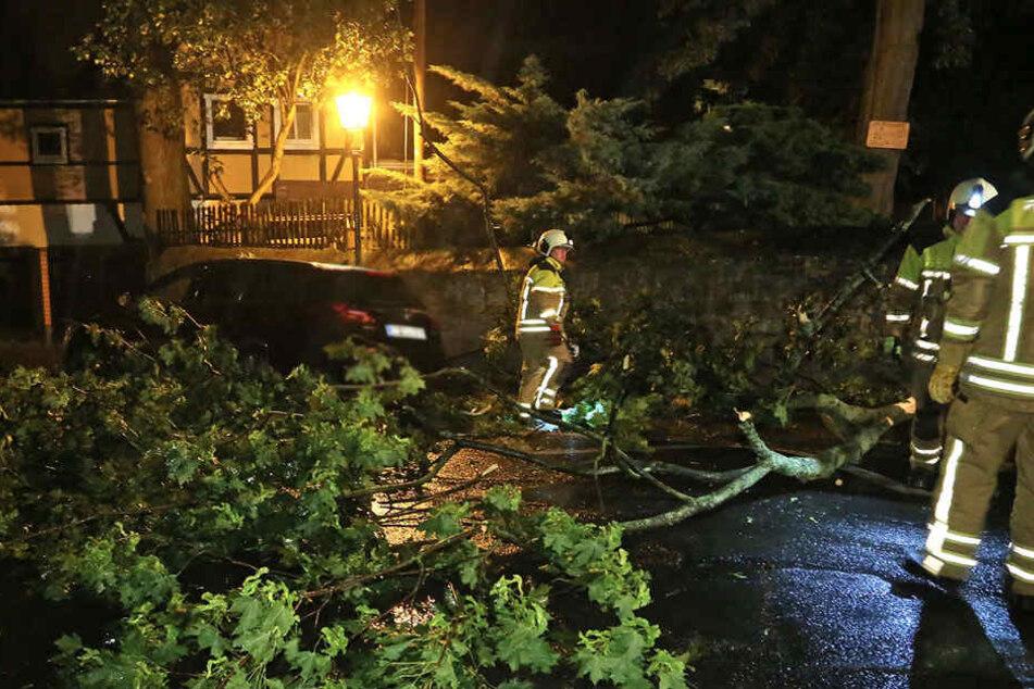 Auf der Leßkestraße waren Teile eines Baumes auf ein parkendes Auto gekippt.