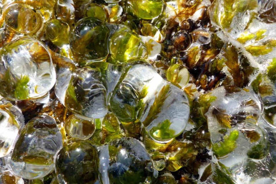 So schön glitzern klare Eistropfen auf grünem Grund.