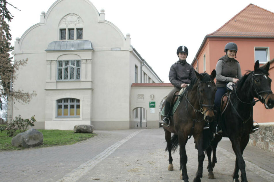 Das Landgestüt von Sachsen-Anhalt steht zum Verkauf. Doch das Angebot stößt kaum auf Interesse.