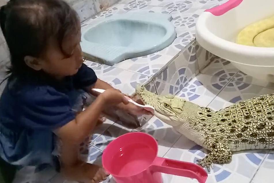 Ein kleines Mädchen in Indonesien putzt einem Krokodil die Zähne, im Hintergrund badet eine Würgeschlange.