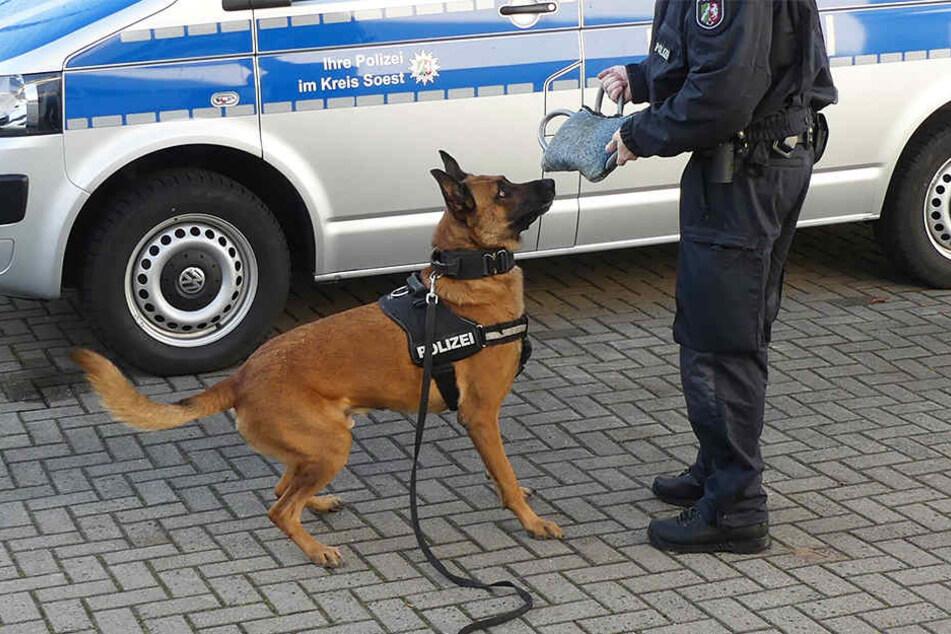 """Polizeihund """"Joker"""" fasste den zweiten Dieb, der sich übers Dach aus dem Staub machen wollte."""