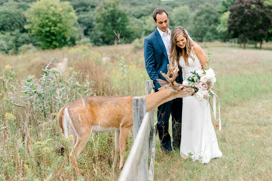 Das Reh wagte sich vorsichtig an das Brautpaar.