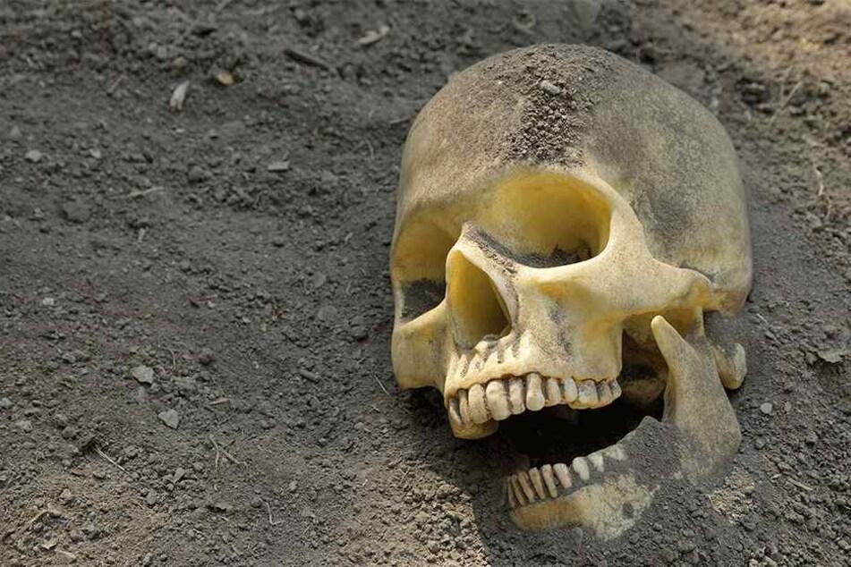 Der Schädel war im Garten vergraben (Symbolbild).