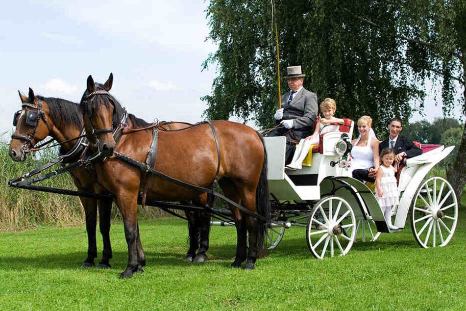 Pferde drehen durch: Traumhochzeits-Kutschfahrt endet auf Feld