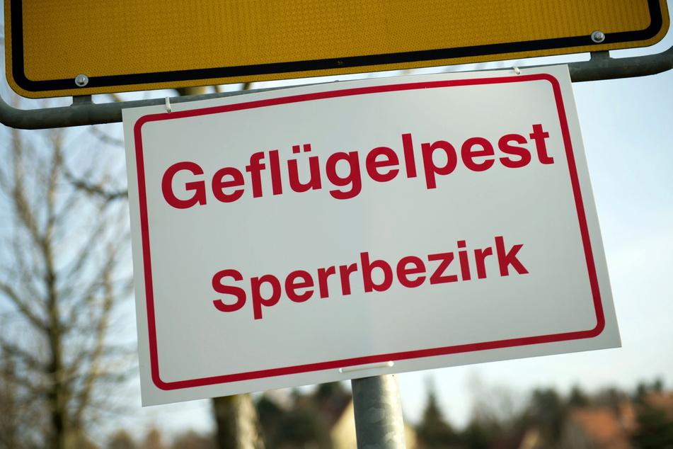 Im Vogtland kam es zu zwei Vogelgrippe-Ausbrüchen. Es soll ein Sperrgebiet eingerichtet werden (Symbolbild).