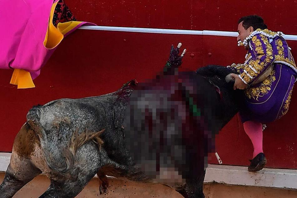 Tierschützer fassungslos! Riesen-Ansturm auf Tickets für Stierkampf